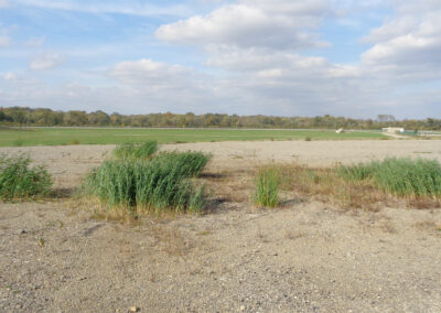 Environmental Assessment, Wetland Delineation and Endangered Species Assessment for the Rockford Airport Expansion